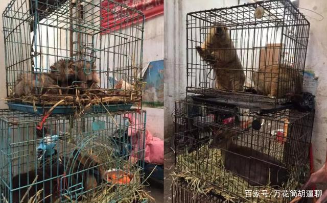 中国 野生 動物 食べる